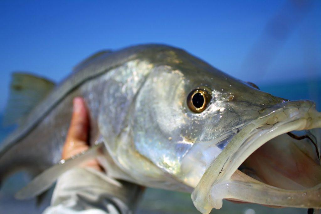 Searok Offshore Fishing Charters