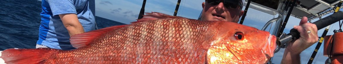 Ponce Inlet Offshore Fishing Report – Atlantic Red Snapper Season
