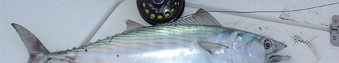 Offshore Fly Fishing with Searok Charters