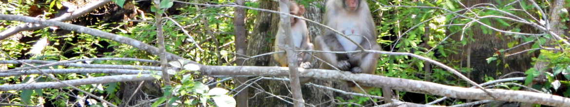 Guided Wildlife Tours in Ocala National Forest