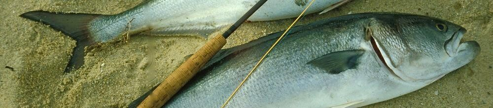 New Smyrna and Daytona Beach Offshore Fishing Report